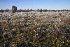 Πρώτος παγετός Στοκ Φωτογραφίες