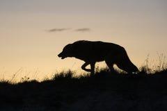 Πρώτο ελαφρύ κυνήγι Στοκ Φωτογραφίες