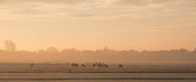 Πρώτο πρωί του παγετού και της υδρονέφωσης Στοκ Φωτογραφία