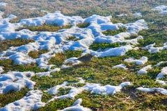 Πρώτο πρόωρο πουλί (ο ουρανός lark (arvensis Alauda) έφθασε από το νότο Στοκ φωτογραφία με δικαίωμα ελεύθερης χρήσης