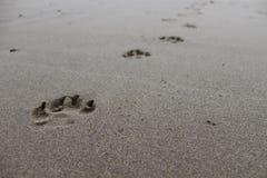 Πρώτο πόδι μπροστινό Στοκ Φωτογραφία