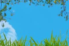 Πρώτο πλάνο δέντρων και χλόης με το μπλε ουρανό για το υπόβαθρο προτύπων Στοκ εικόνα με δικαίωμα ελεύθερης χρήσης