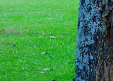 Πρώτο πλάνο ενός κορμού δέντρων Στοκ εικόνα με δικαίωμα ελεύθερης χρήσης