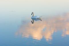 Πρώτο φως σε μια λίμνη Στοκ Φωτογραφία