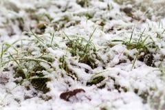 Πρώτο χιόνι πέρα από το χορτοτάπητα Στοκ Εικόνες