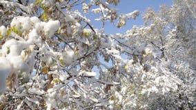 Πρώτο χιόνι στα δέντρα φιλμ μικρού μήκους
