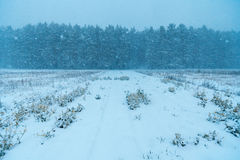 Πρώτο χιόνι στον τομέα Στοκ φωτογραφίες με δικαίωμα ελεύθερης χρήσης