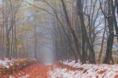 Πρώτο χιόνι στο δάσος φθινοπώρου Στοκ φωτογραφία με δικαίωμα ελεύθερης χρήσης