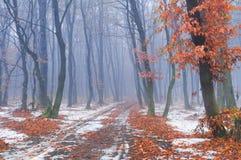 Πρώτο χιόνι στο δάσος φθινοπώρου Στοκ Φωτογραφία