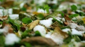 Πρώτο χιόνι στο έδαφος Παγωμένα χλόη και φύλλα Μακρο βίντεο φιλμ μικρού μήκους