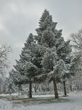 Πρώτο χιόνι στο πάρκο Στοκ εικόνες με δικαίωμα ελεύθερης χρήσης