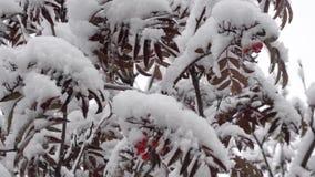 Πρώτο χιόνι τον Οκτώβριο απόθεμα βίντεο