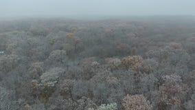 πρώτο χιόνι απόθεμα βίντεο