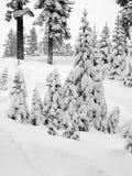πρώτο χιόνι