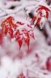 Πρώτο χιόνι onstet στο χειμώνα Στοκ Φωτογραφίες