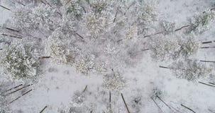 Πτήση άμεσα επάνω από το χειμερινό δάσος απόθεμα βίντεο