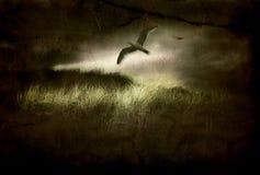 πτήση γεια RES πουλιών Στοκ φωτογραφίες με δικαίωμα ελεύθερης χρήσης