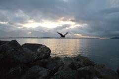 Πτήση ηλιοβασιλέματος Στοκ Εικόνα