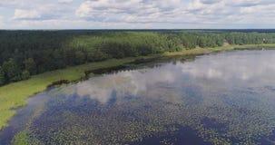Πτήση κηφήνων φυκιών κρίνων νερού λιμνών και δάσος πεύκων απόθεμα βίντεο