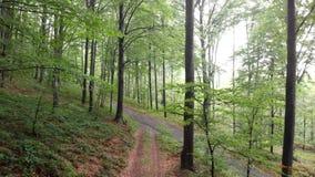 Πτήση μέσω του δάσους - βουνό Goc Σερβία απόθεμα βίντεο
