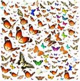 Πτήση μετανάστευσης πεταλούδων στοκ εικόνα με δικαίωμα ελεύθερης χρήσης