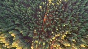 Πτήση πέρα από τα δέντρα Ηλιοβασίλεμα Εναέριο μήκος σε πόδηα απόθεμα βίντεο