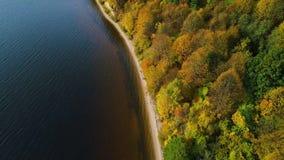 Πτήση πέρα από τη λίμνη και το δάσος στο φθινόπωρο φιλμ μικρού μήκους
