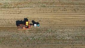 Πτήση πέρα από τη συγκομιδή των πατατών με potato-digger το ρυμουλκό, το τρακτέρ και τους ανθρώπους Εναέρια τοπ άποψη απόθεμα βίντεο