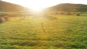 Πτήση πέρα από τον αθλητή στο τέλειο πράσινο λιβάδι χλόης Ηλιοβασίλεμα στο βουνό απόθεμα βίντεο