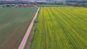 Πτήση πέρα από τον τομέα με τα ανθίζοντας λουλούδια και τη εθνική οδό Canola Εναέριο μήκος σε πόδηα Dron απόθεμα βίντεο