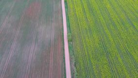Πτήση πέρα από τον τομέα με τα ανθίζοντας λουλούδια και τη εθνική οδό Canola Εναέριο μήκος σε πόδηα Dron φιλμ μικρού μήκους