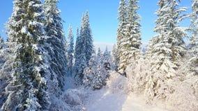 Πτήση πέρα από το χιονώδες κωνοφόρο δάσος βουνών στο ηλιοβασίλεμα Σαφής ηλιόλουστος παγωμένος καιρός απόθεμα βίντεο