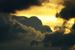 Πτήση πουλιού Στοκ φωτογραφίες με δικαίωμα ελεύθερης χρήσης