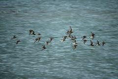 Πτήση του πουλιού Στοκ φωτογραφία με δικαίωμα ελεύθερης χρήσης