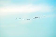 Πτήση των πουλιών Στοκ Εικόνα