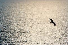 πτήση Στοκ φωτογραφία με δικαίωμα ελεύθερης χρήσης