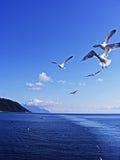 πτήση Στοκ εικόνες με δικαίωμα ελεύθερης χρήσης