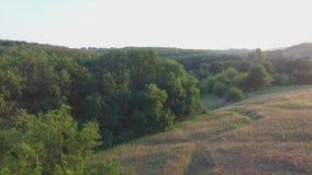 Πτήση Aero κοντά στο μόνο δέντρο στο ηλιοβασίλεμα απόθεμα βίντεο