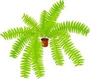 πτεριδόφυτο φυτό σπιτιών απεικόνιση αποθεμάτων