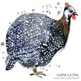πτηνά Γουινέα άγριο άνευ ραφής σχέδιο watercolor πουλιών απεικόνιση αποθεμάτων