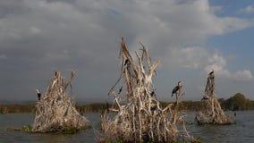 Πτηνά γύρω από τη λίμνη Naivasha φιλμ μικρού μήκους