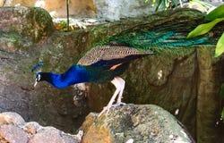 Πτηνά ζουγκλών Στοκ φωτογραφία με δικαίωμα ελεύθερης χρήσης