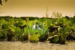 Πτηνά νερού Στοκ φωτογραφία με δικαίωμα ελεύθερης χρήσης