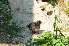 Πτηνά Στοκ Φωτογραφία