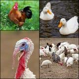 πτηνά Στοκ φωτογραφίες με δικαίωμα ελεύθερης χρήσης