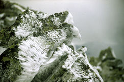 Πτηνόμορφος βράχος Στοκ Εικόνα