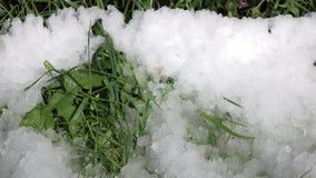 Πτώσεις άνοιξη στο υπόβαθρο της χλόης και του χιονιού Χρονικό σφάλμα απόθεμα βίντεο