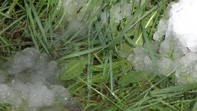 Πτώσεις άνοιξη στο υπόβαθρο του πράσινου υπολείμματος χλόης και χιονιού απόθεμα βίντεο