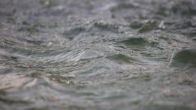 Πτώσεις βροχής που πέφτουν κάτω φιλμ μικρού μήκους