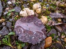 Πτώσεις βροχής σε ένα κομμάτι του ξύλου Στοκ Φωτογραφία
